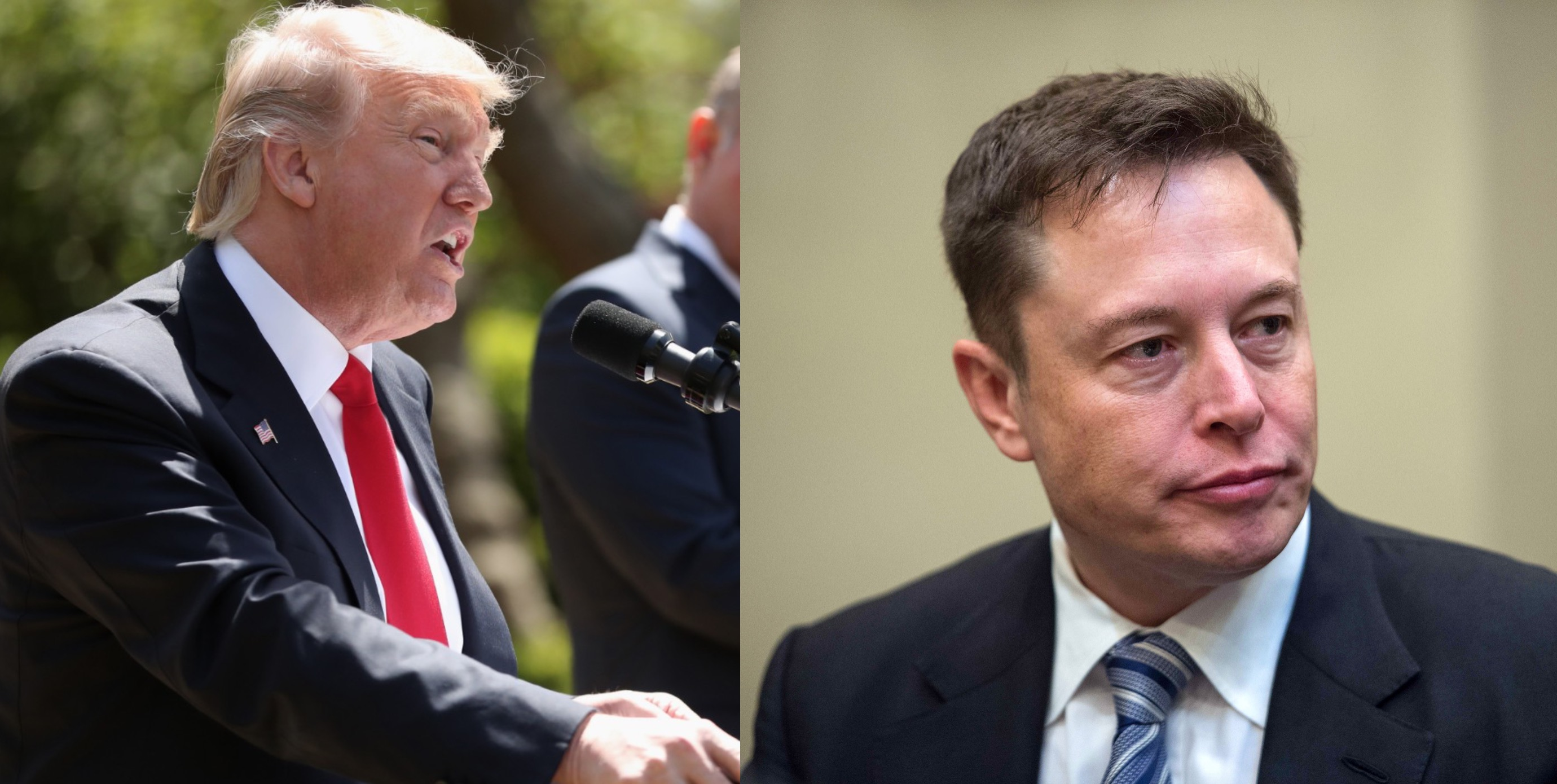 Elon Musk led the way, now Trump's council is completely wiped out