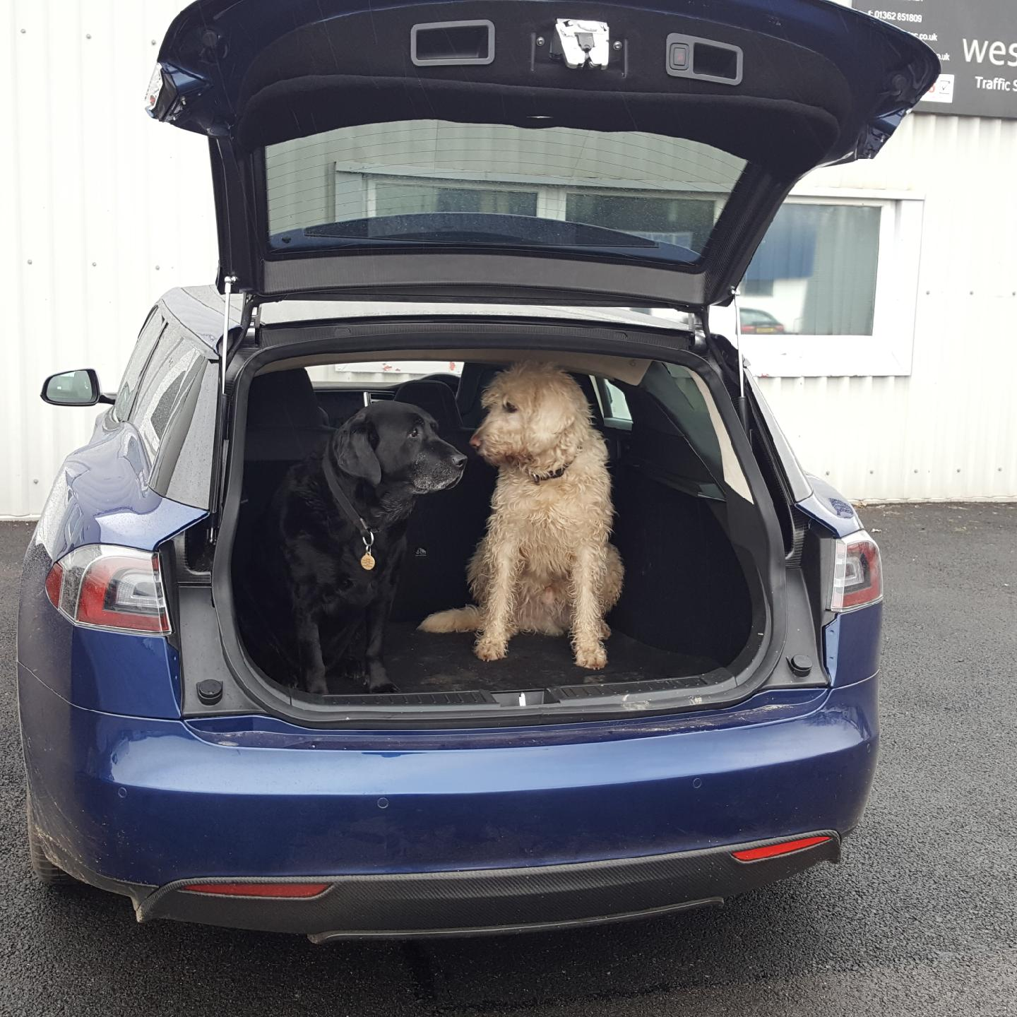 questnorfolk-model-s-wagon-shooting-brake-dogs