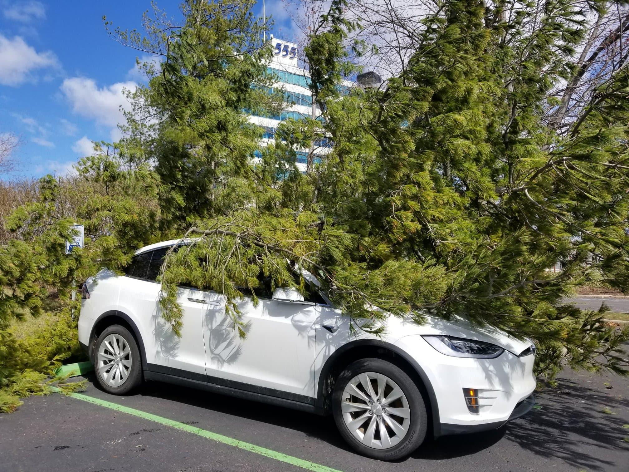 tesla-model-x-tree-fall-roof