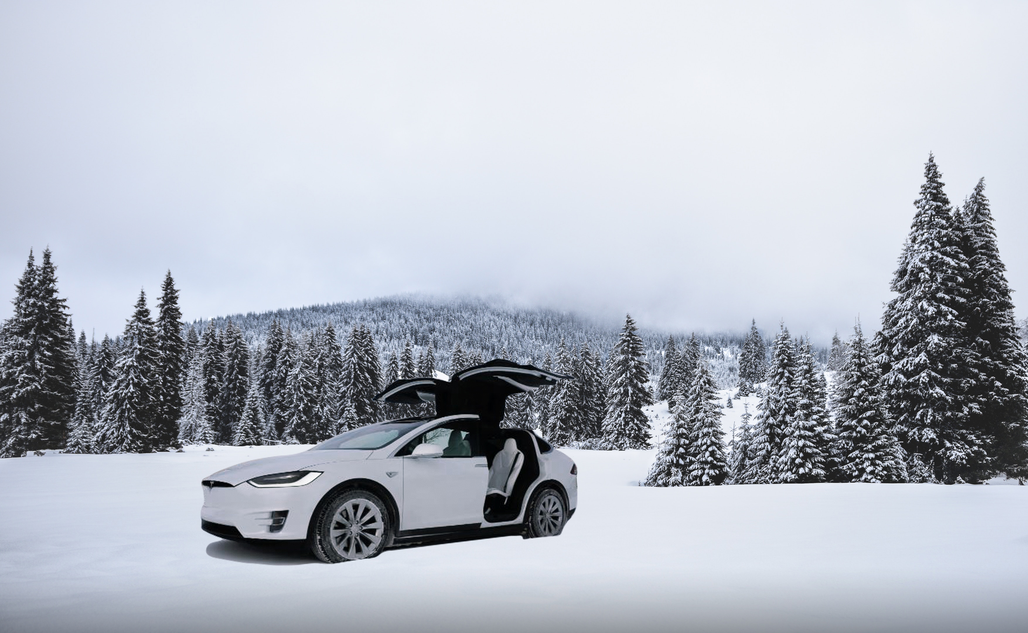White Model X in snow and pine trees