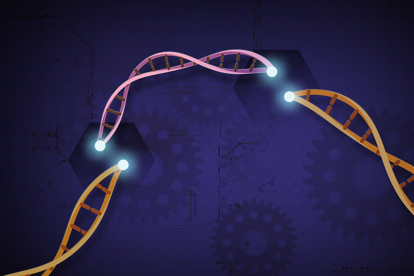 CRISPR-Cas9 editing.
