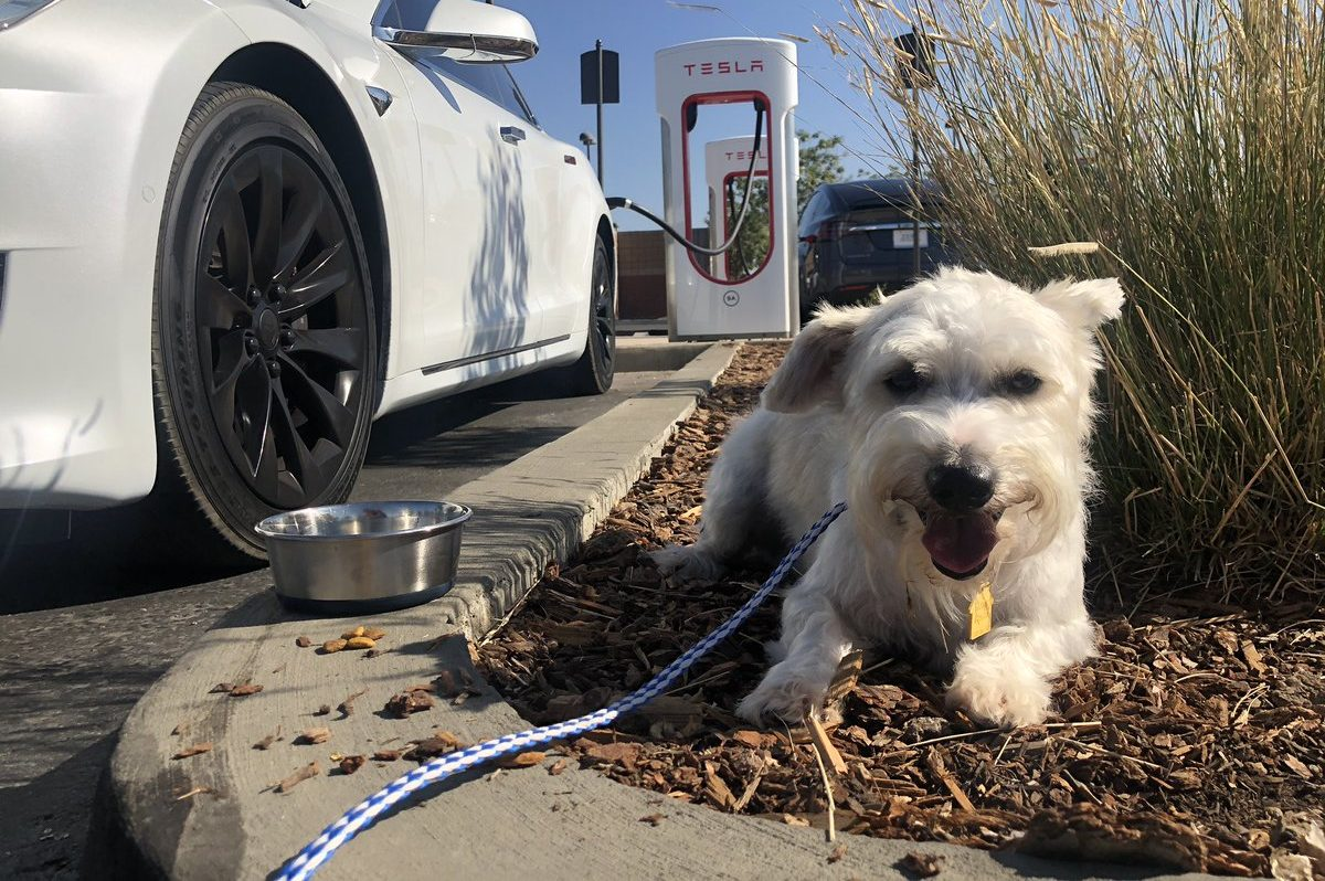 dogs-of-tesla-1