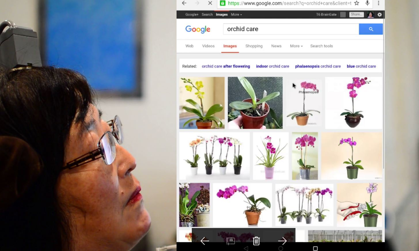 Orchid search.