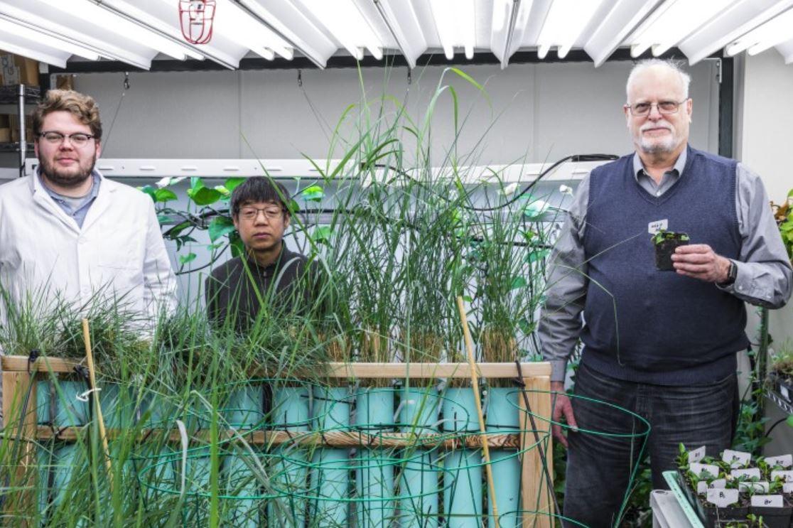 pothos-plant-team