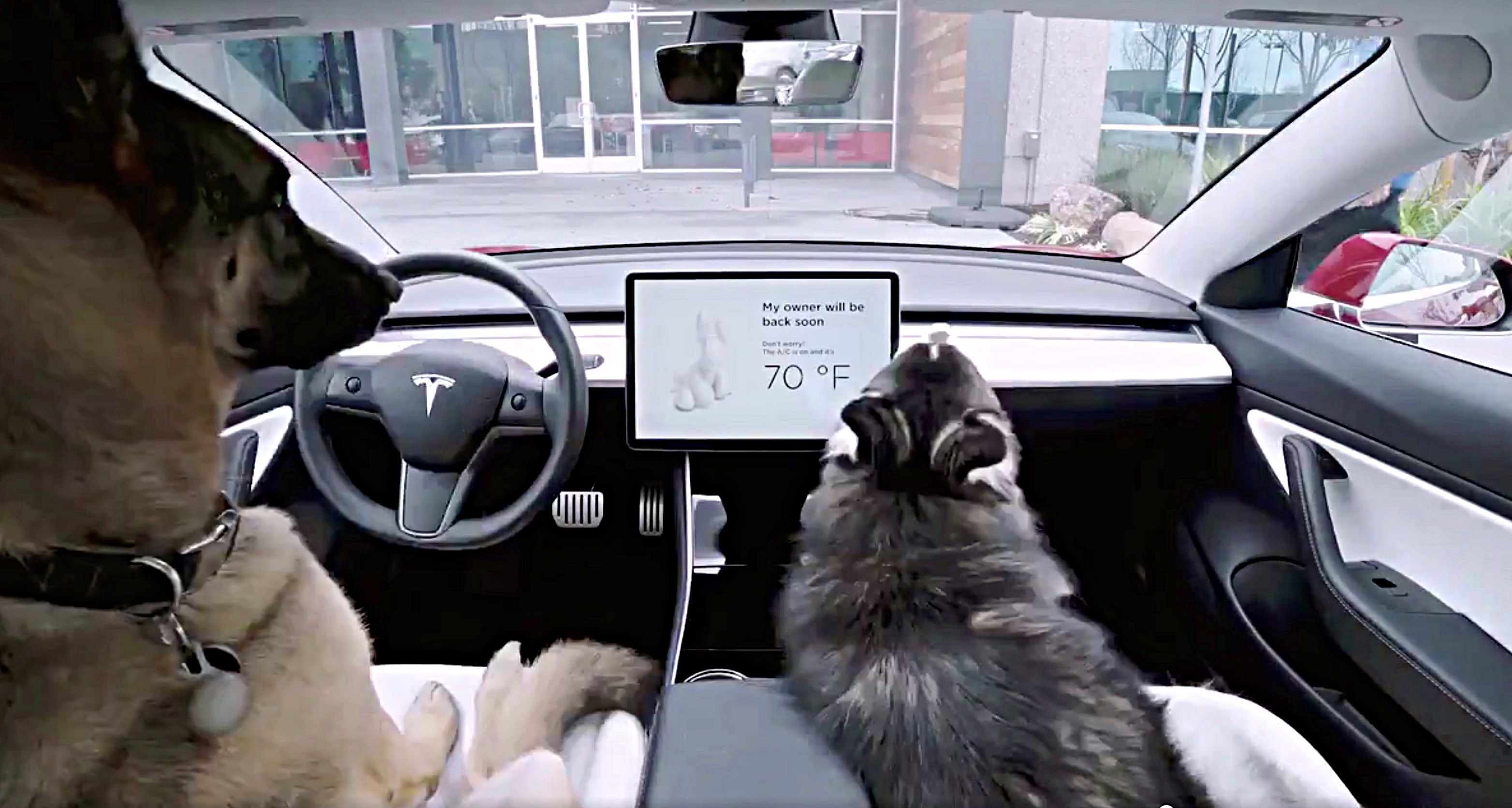 Tesla Disses Cats, Rolls Out Dog Mode In Over-The-Air Update