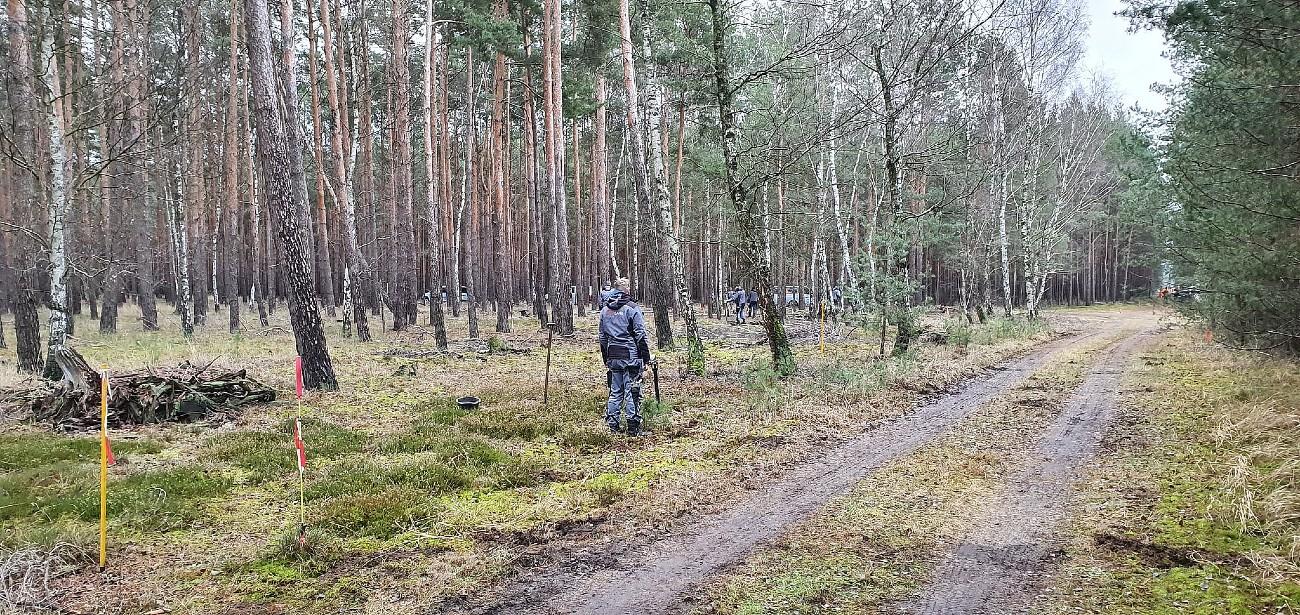 forest-gf4-brandenburg