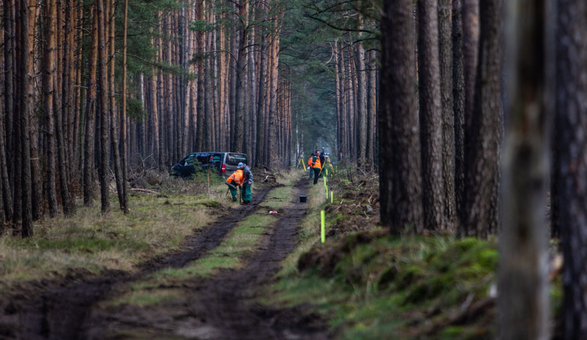 gf4-trees-clearing-2048x1188.jpg