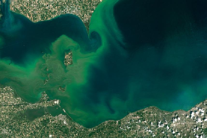 erie algae