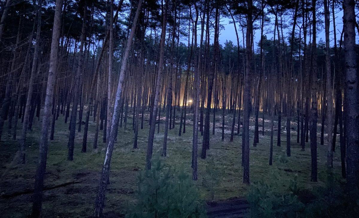 tesla-brandenburg-trees-giga-berlin