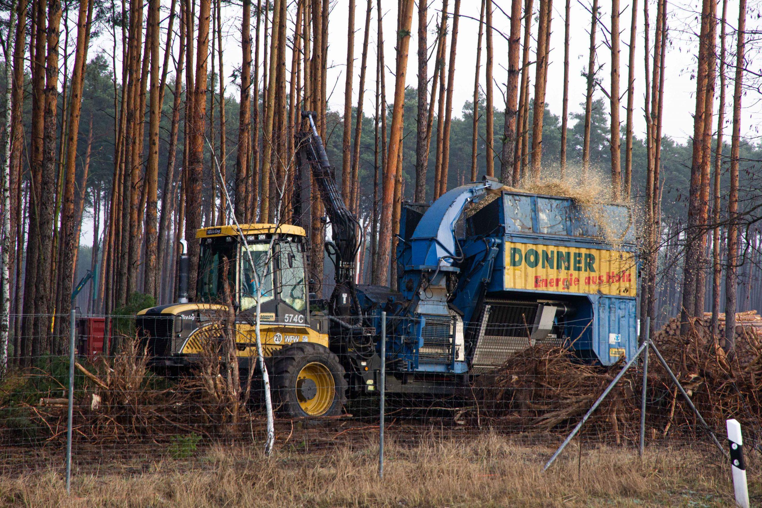 tesla-giga-berlin-tree-replanting