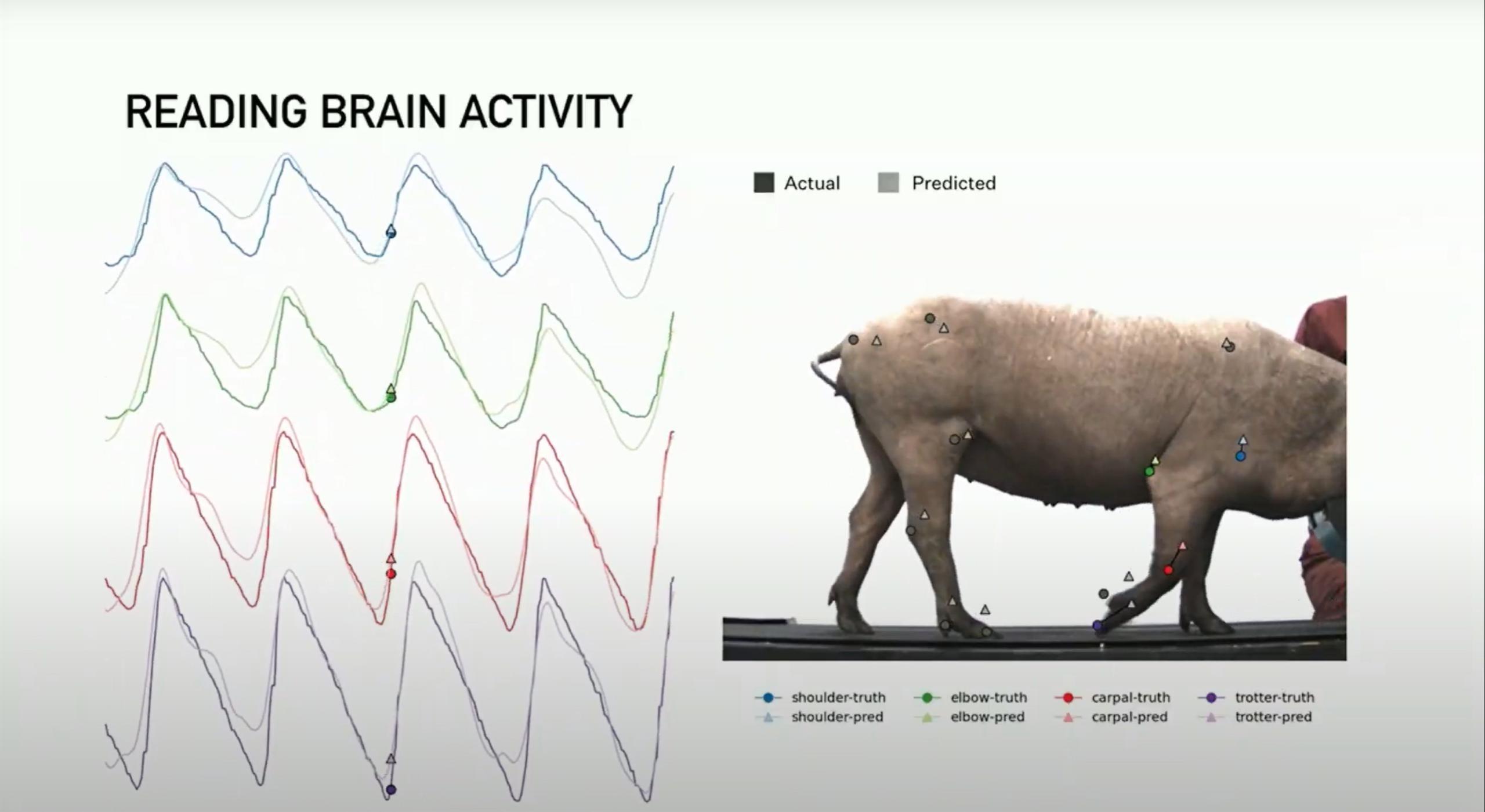 Link v0.9 (Neuralink) pig testing joint tracking 1 (c)