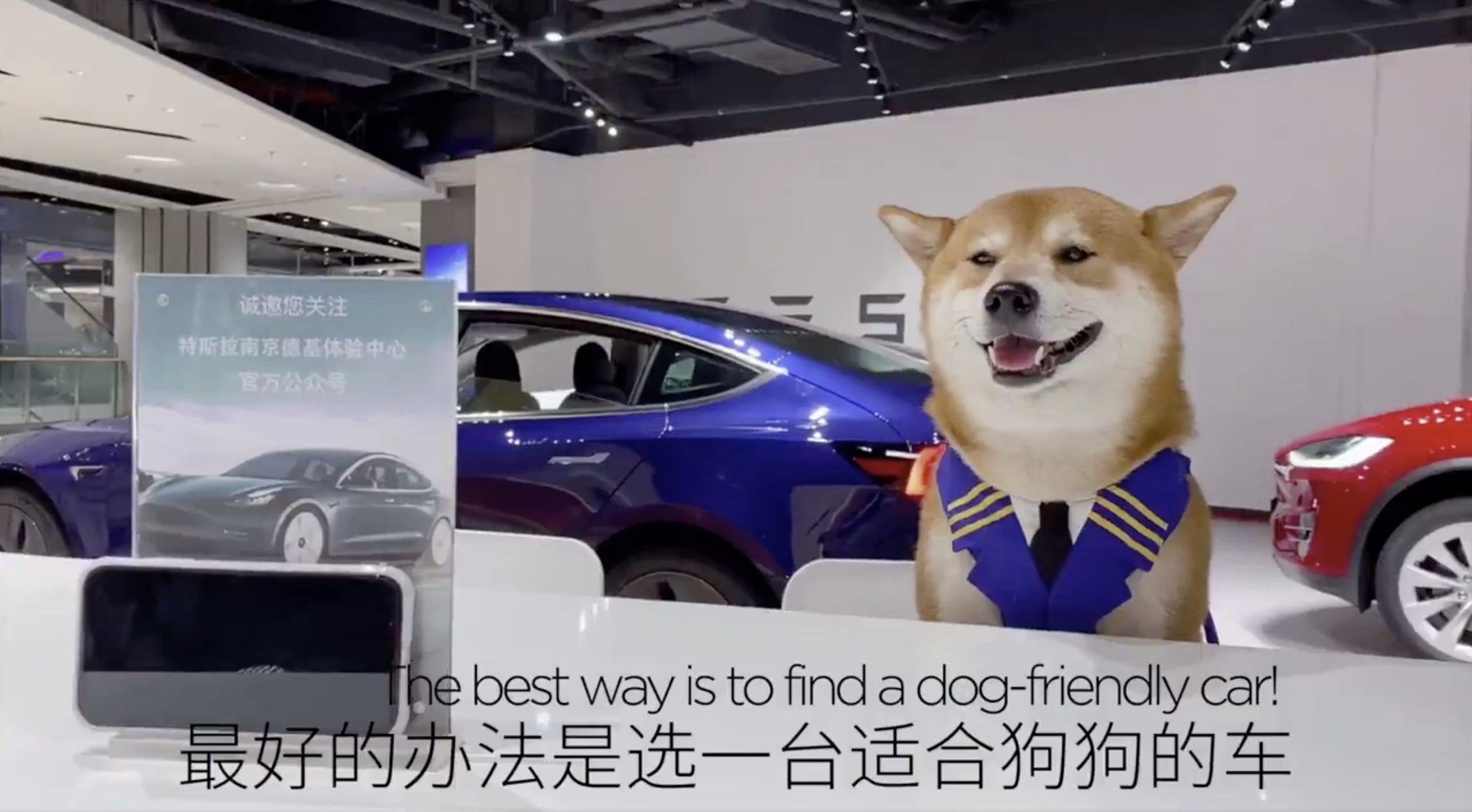 Tesla-China-Model-3-doge-meme