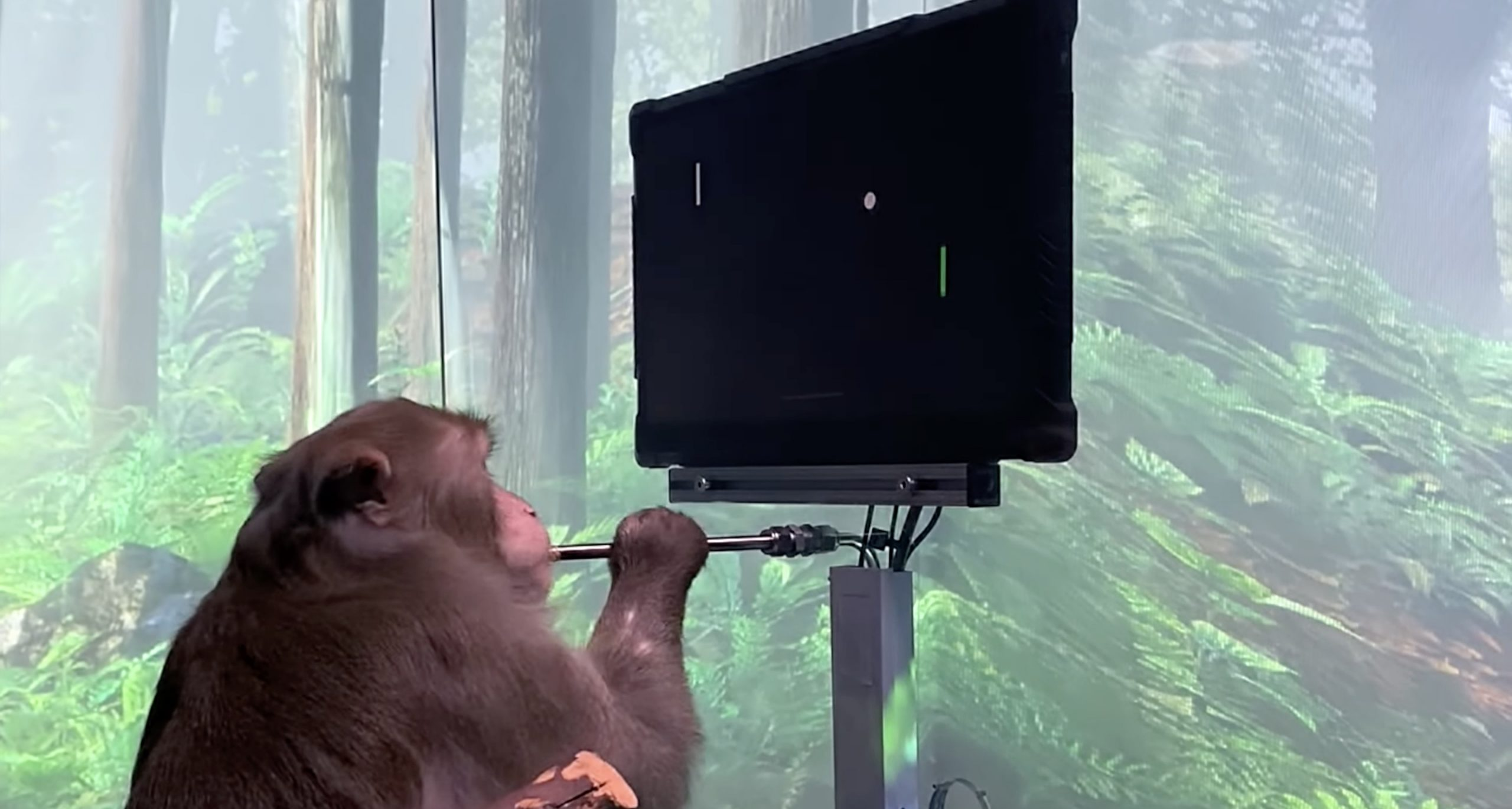 elon-musk-NeuraLink-monkey-mind-control-game-video
