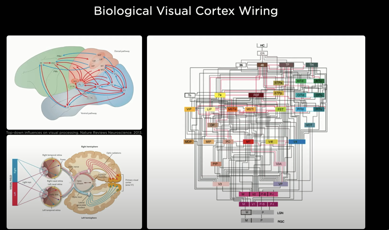 Tesla-AI-Day-Andrej-karpathy-neural-networks-vs-brain